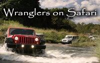Jeep Wranglers on Safari in Africa